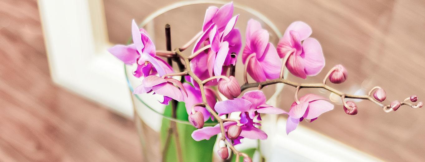 Kieferorthopaedie Aguero - Impressionen Header Blumenvase